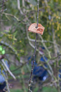 Toast on the tree